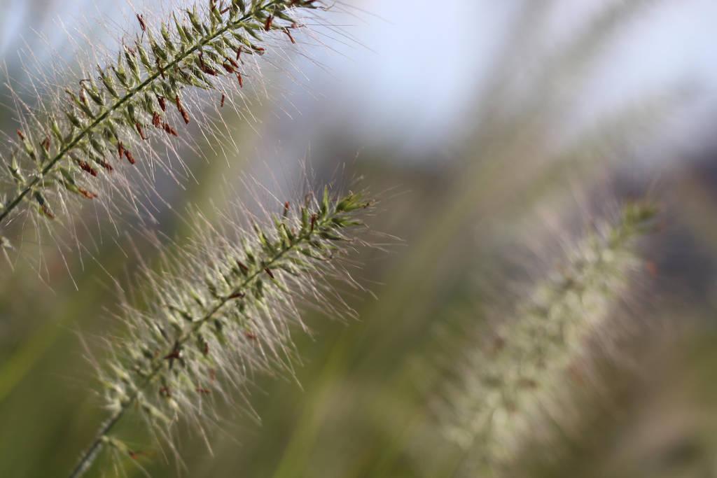 grass by Lilithaya