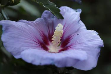 beautiful flower^^ by Lilithaya
