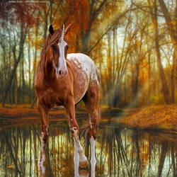 Premade-~-Spotty-Butt-Unicorn-(Full-Size) by KeonahN