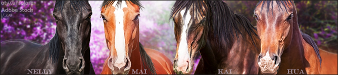 Stable-Banner-~-Charmed-Acres-4-horse by KeonahN