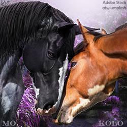 Stable-Avi-~-Charmed-Acres-2-Horse by KeonahN