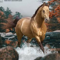 Premade-~-Buckskin-in-water-(Full-Size) by KeonahN