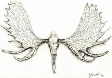 moose skull by pgmt