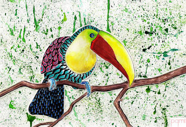 Toucan by pgmt