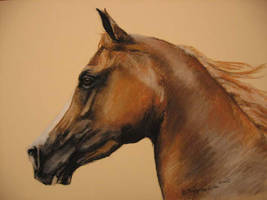 Horse 12 by Nagareth