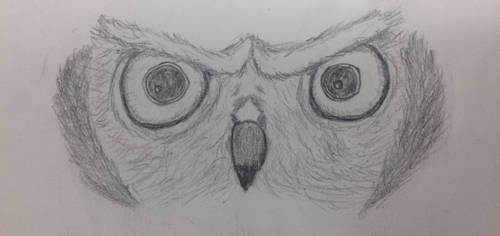 Staring Owl by paigesugarbutts