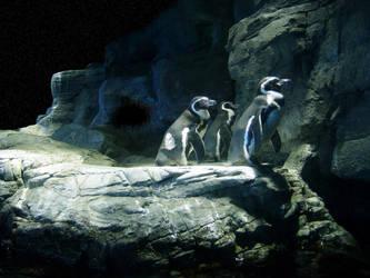 Penguins  Waiting For  A Shot by neogene