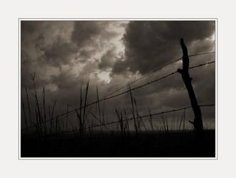 Fence Row by solodaddy