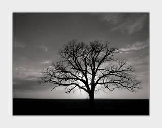 'Tree' by solodaddy