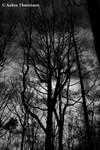 Vanitas No Horizons by Morphine-Cloud