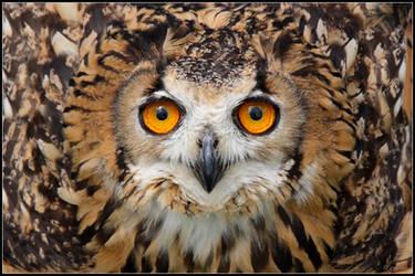 Eagle Owl Defense by cycoze