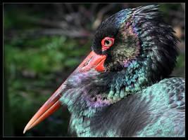 Black Stork by cycoze