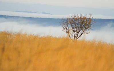 Autumn Tree by ferrohanc