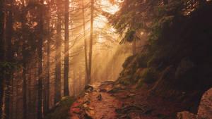 Forest by ferrohanc