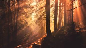 Forest Evening by ferrohanc