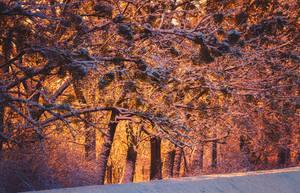 Winter Magic by ferrohanc