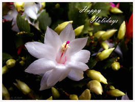 Happy Holidays 2008 by osagelady