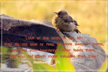 Matthew 6:26 by joyrascal