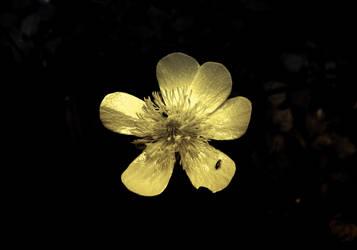 flower by mephetic