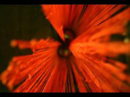 Red Thread Ahead by T-a-g-g-e-r