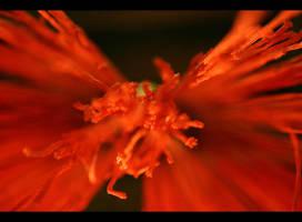 Red Thread Ahead 2 by T-a-g-g-e-r