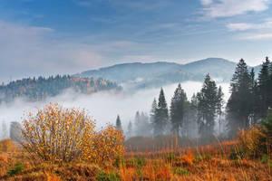 Fog. by lica20