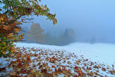 Autumn-Winter mornings by lica20