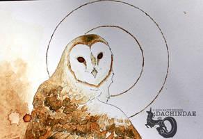 Coffee owl closeup by Dachindae