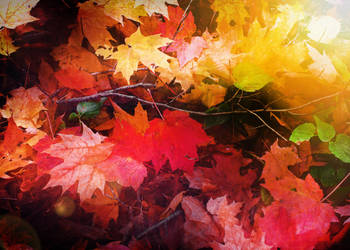 Autumn's Last Glow by photorip