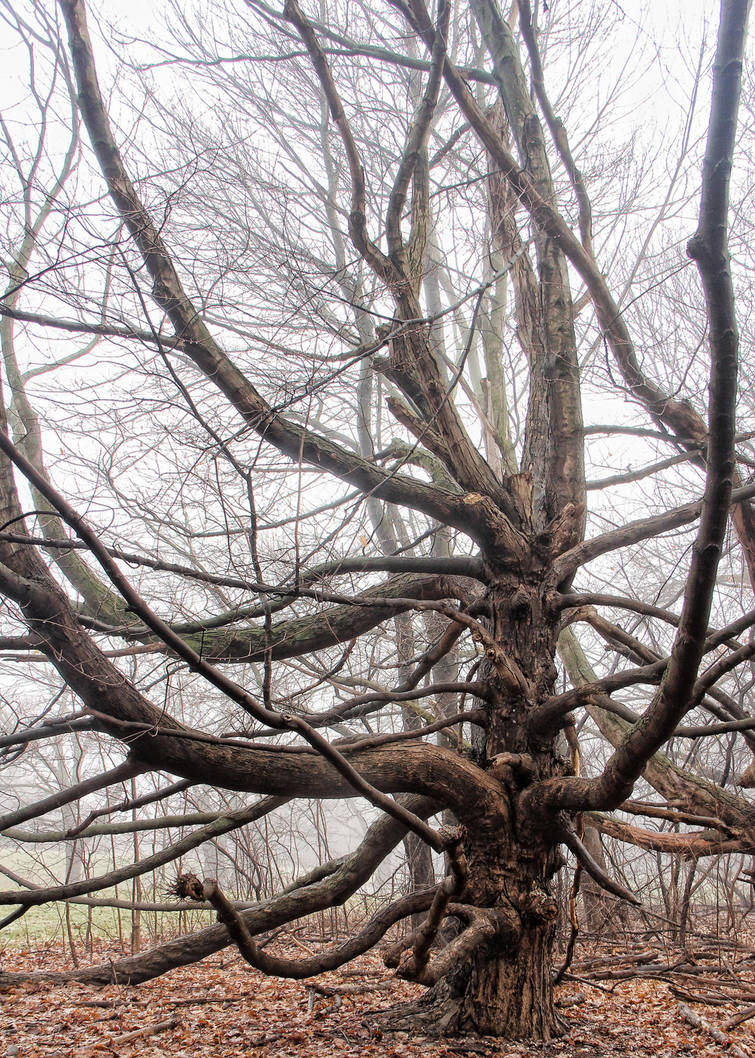 Limbs by photorip