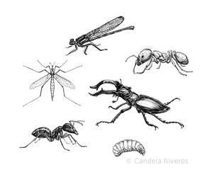Assorted insects 2 by YemaYema