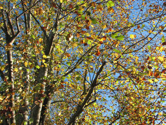 Autumn Sky Stock 2 by MissyStock