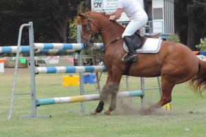 Jump Refusal Horse Stock by Silverti