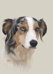 Aussie Shepherd by Silverti