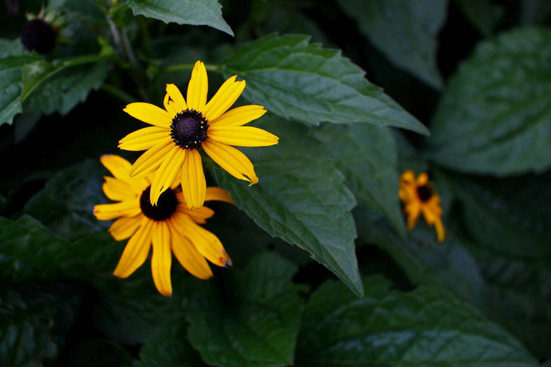 Common Bc Yellow Flowers 7 By Forthewinwinx3 On Deviantart