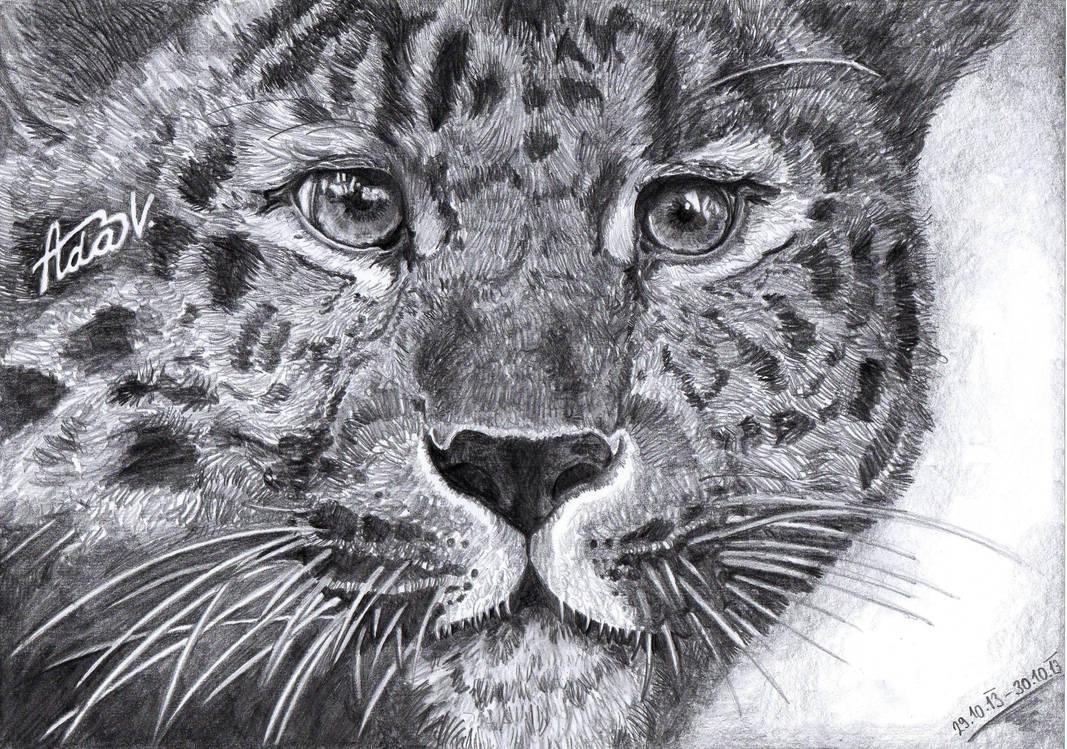 My little leopard :) by Aadavy