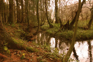 Dalby Forest by Five5times18