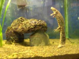 Salamander Circus by Melurinn