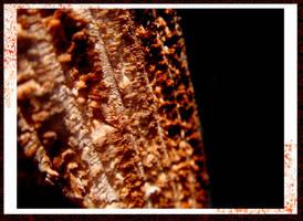Wood--detailed macro by sheiladelacroix