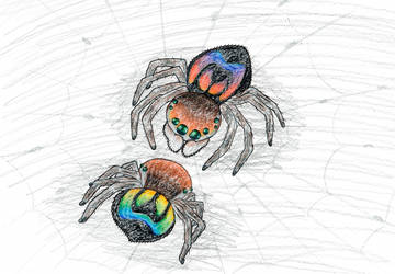 Rainbow Jumping Spider by MiniDragonfly