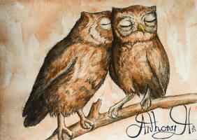 An Owl's kiss by antzmanz