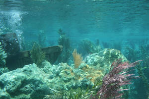 underwater by SStocker