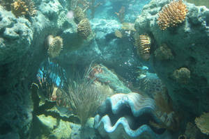 underwater3 by SStocker