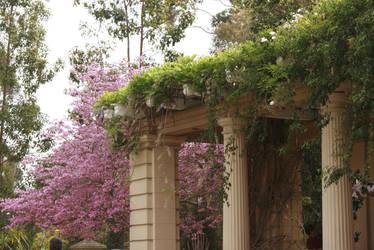 garden by SStocker