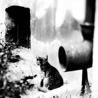 Cat eye. by BartoZ