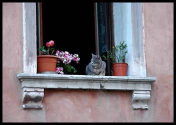 Venetian Cat by FataCorvina