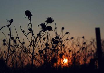 spring sun2 by oklijok