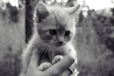 kitty cat3 by oklijok