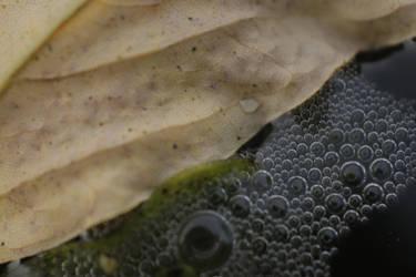 Leaf on a water by JaBoJa