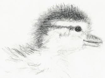 Duckling by asynjur
